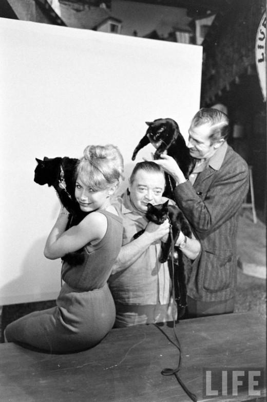01410 Кастинг черных котов в Голливуде