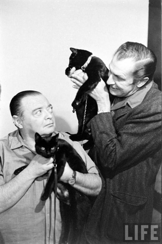 0169 Кастинг черных котов в Голливуде