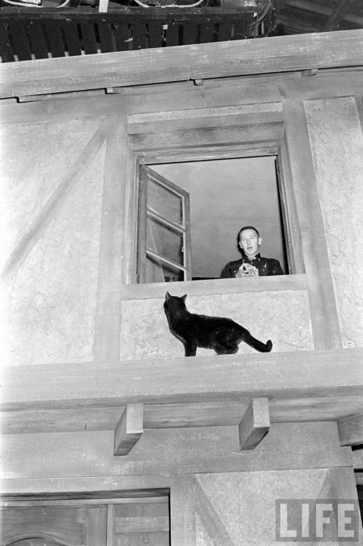 0188 Кастинг черных котов в Голливуде