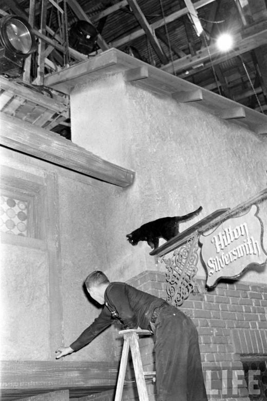 0198 Кастинг черных котов в Голливуде