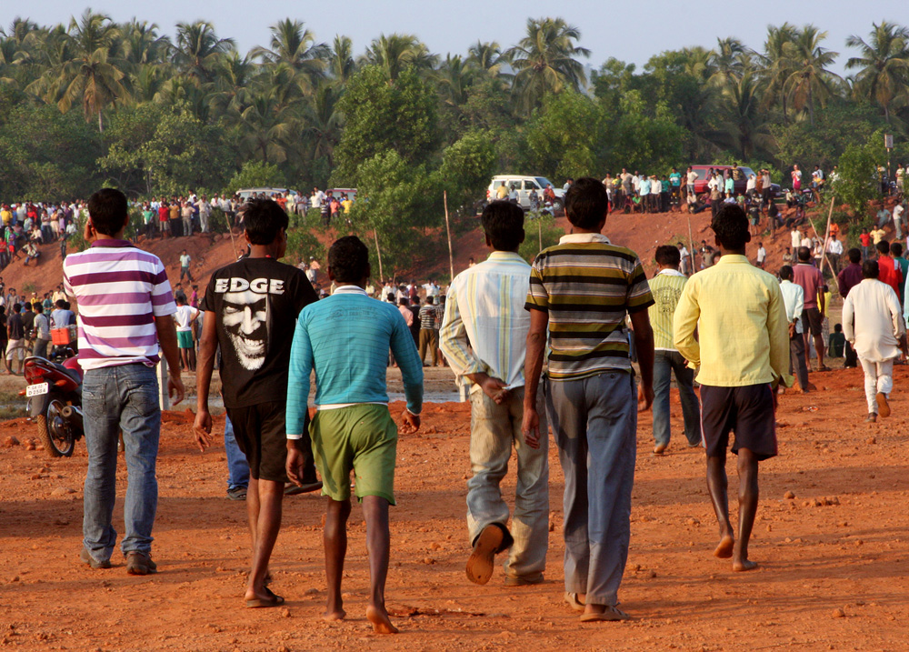 0319 Бои быков в Индии