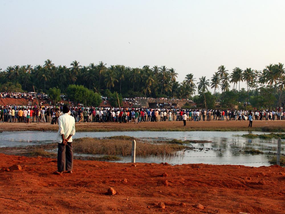 0419 Бои быков в Индии