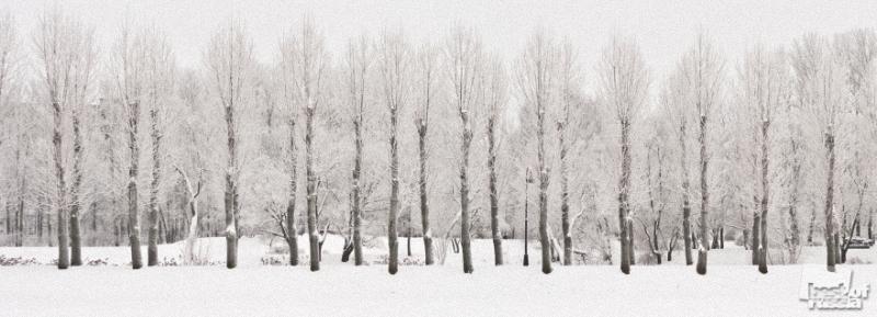"""0464 Лучшие фотографии России 2011. Номинация """"Природа"""""""