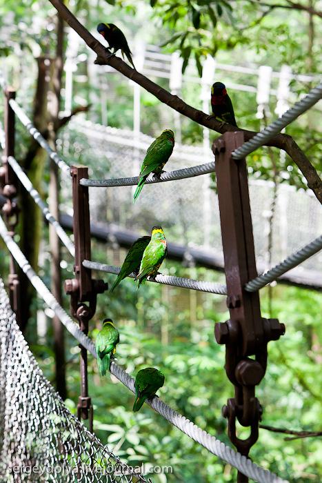 1042 Сингапурский парк птиц