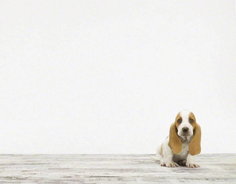 1060 Малыши животных в фотографиях Шерон Монтроуз