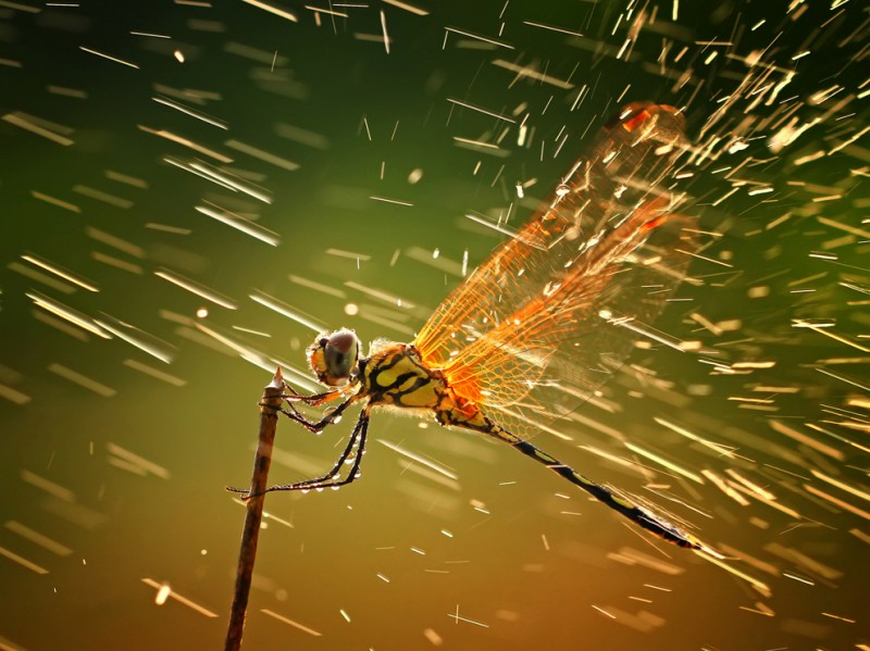 Победители фотоконкурса National Geographic 2011