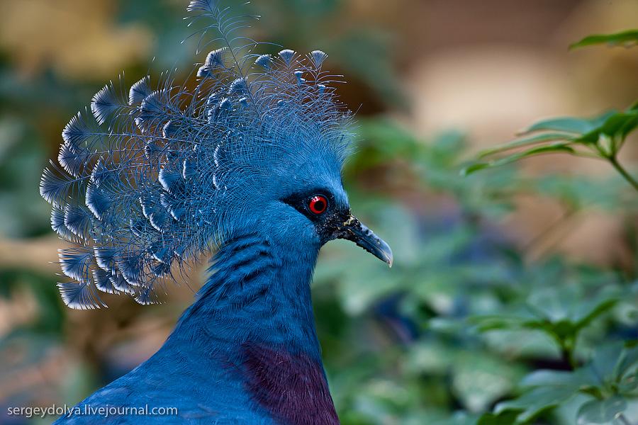 1161 Сингапурский парк птиц