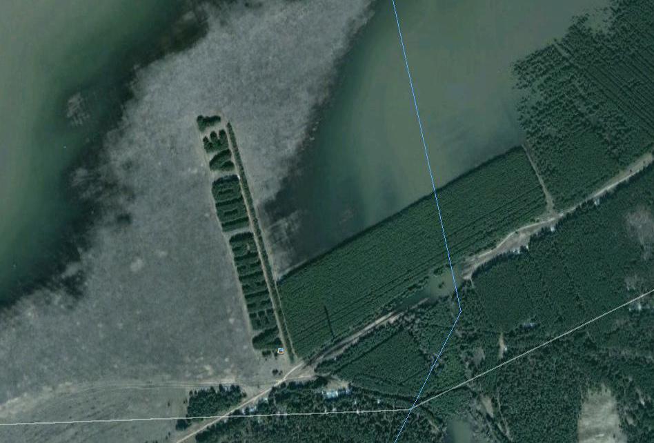 1164 Надписи из деревьев в разных уголках бывшего СССР