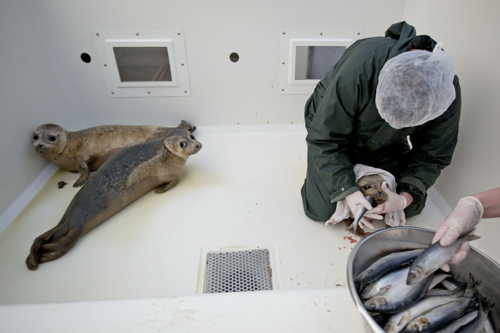 1168 Детский дом для тюленей сирот в Голландии