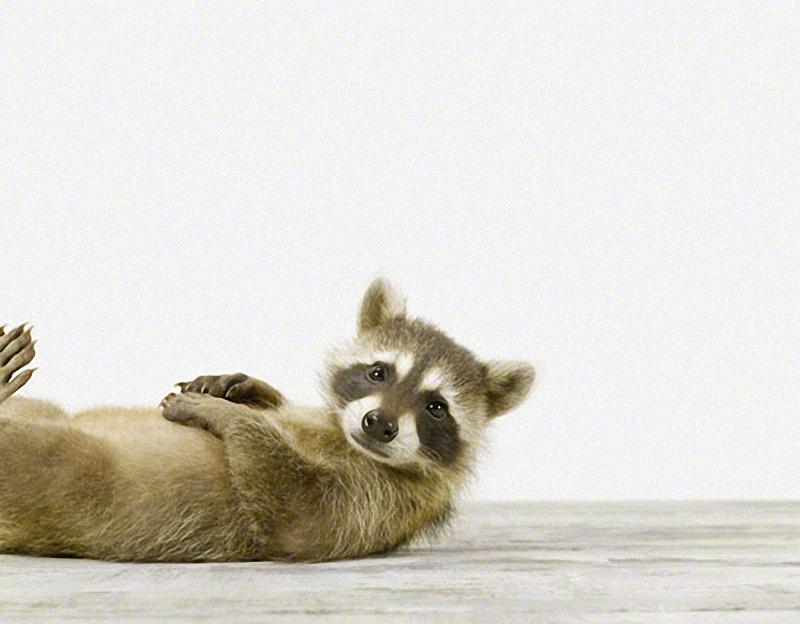 1188 Малыши животных в фотографиях Шерон Монтроуз