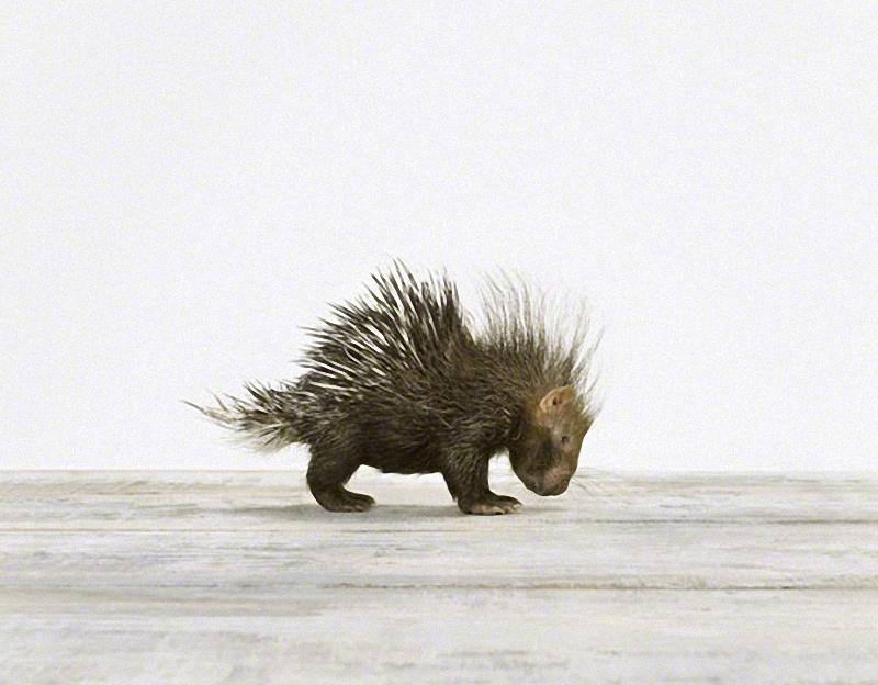 1189 Малыши животных в фотографиях Шерон Монтроуз