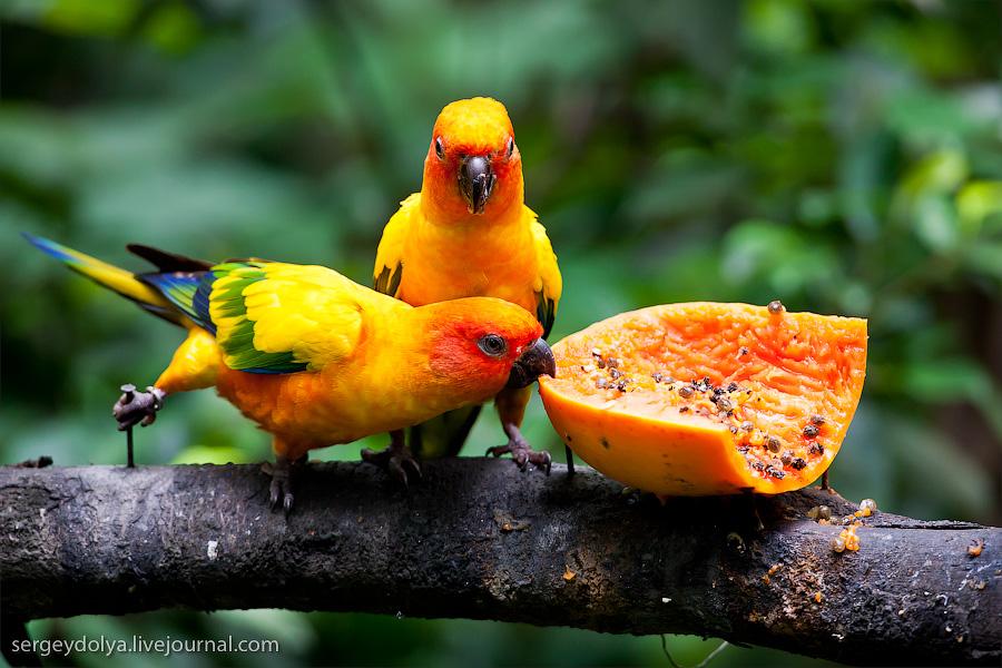 1238 Сингапурский парк птиц