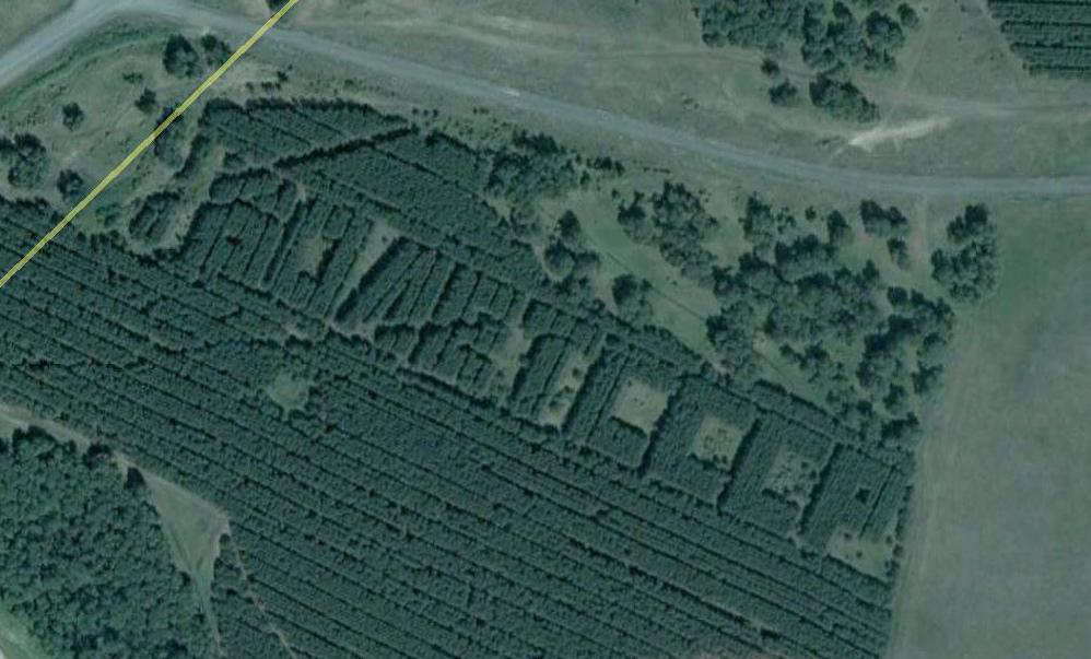 1239 Надписи из деревьев в разных уголках бывшего СССР