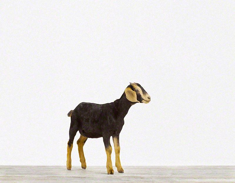 1250 Малыши животных в фотографиях Шерон Монтроуз