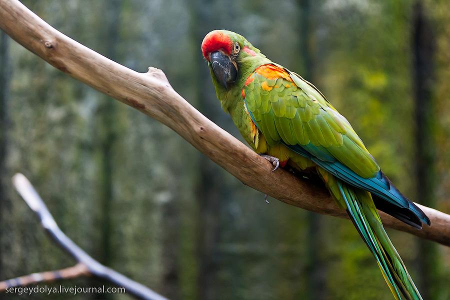 1338 Сингапурский парк птиц