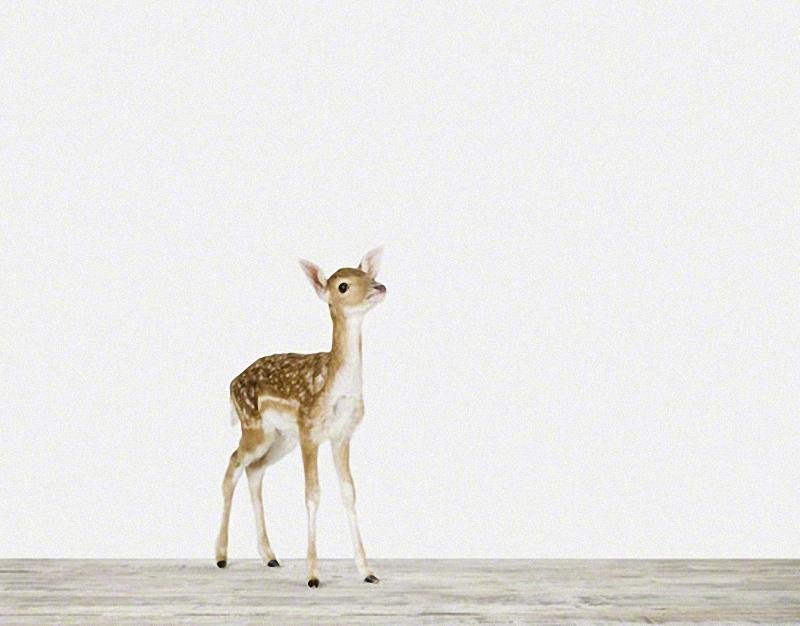 1350 Малыши животных в фотографиях Шерон Монтроуз