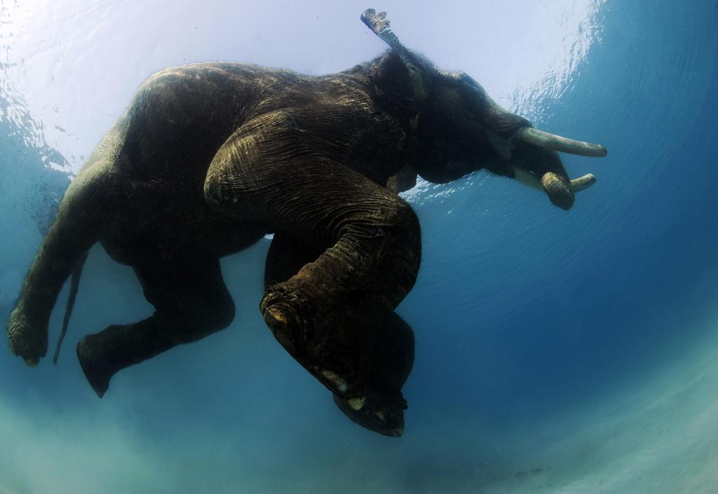 1400 Последний плавающий слон