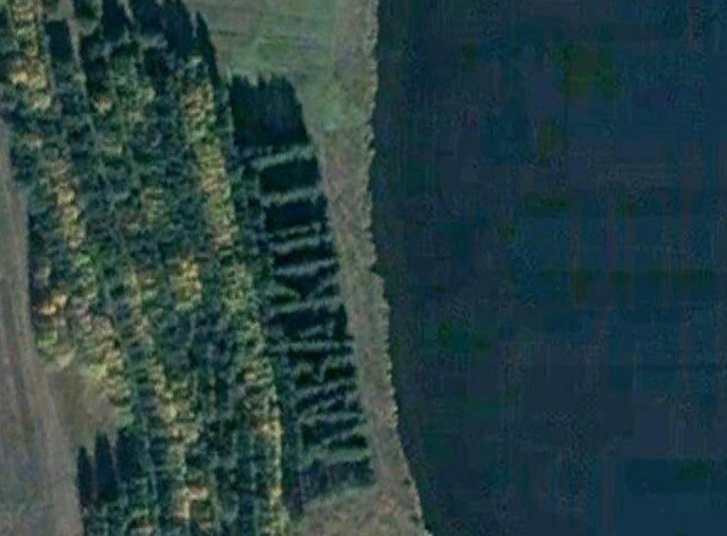 1437 Надписи из деревьев в разных уголках бывшего СССР