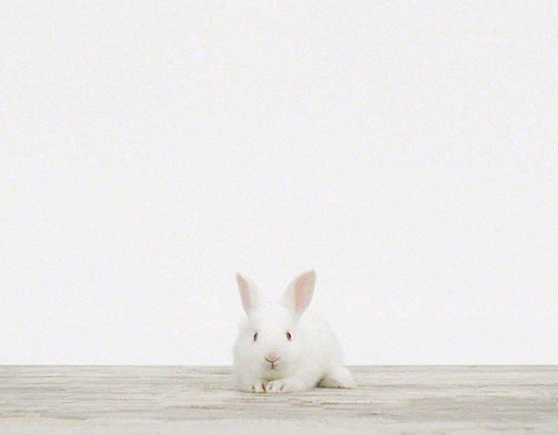 1448 Малыши животных в фотографиях Шерон Монтроуз
