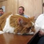 Как сильно вы любите своего питомца – 20 000 $ ради кота