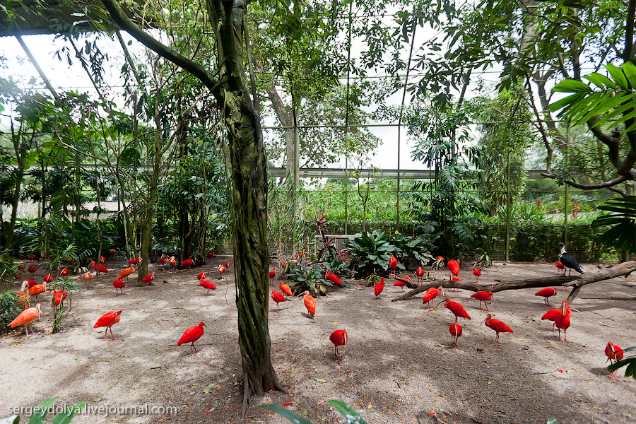 1535 Сингапурский парк птиц