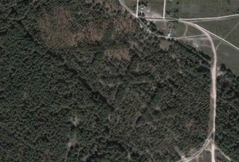 1536 Надписи из деревьев в разных уголках бывшего СССР