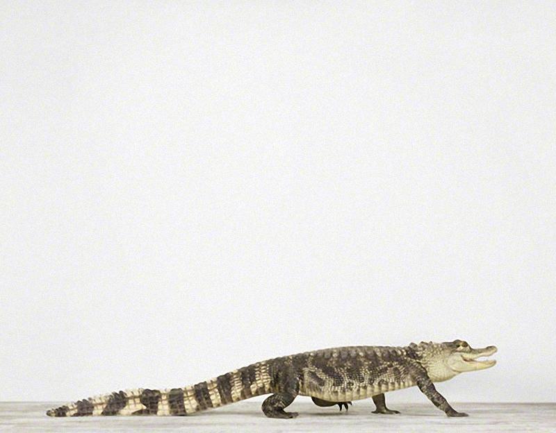1546 Малыши животных в фотографиях Шерон Монтроуз