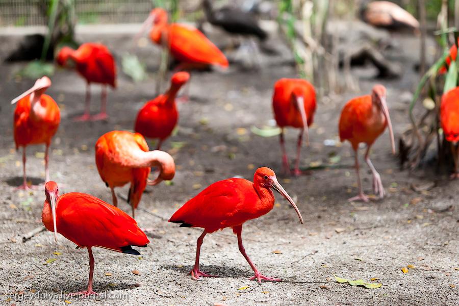1632 Сингапурский парк птиц