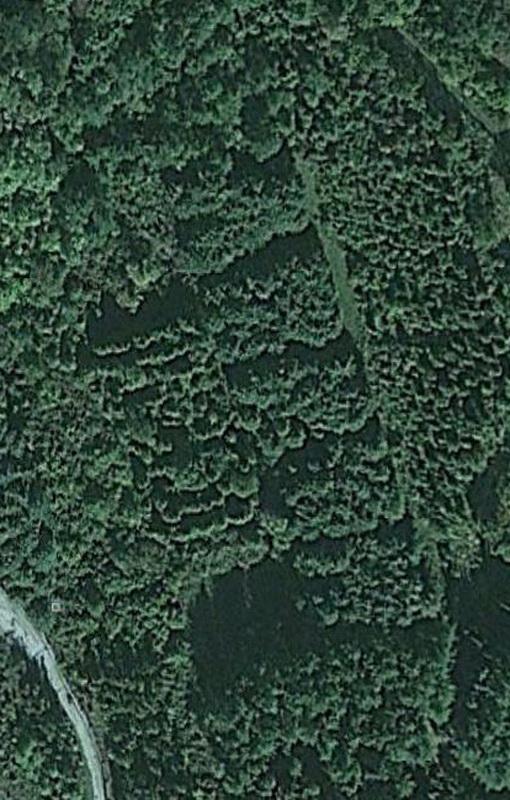 1633 Надписи из деревьев в разных уголках бывшего СССР