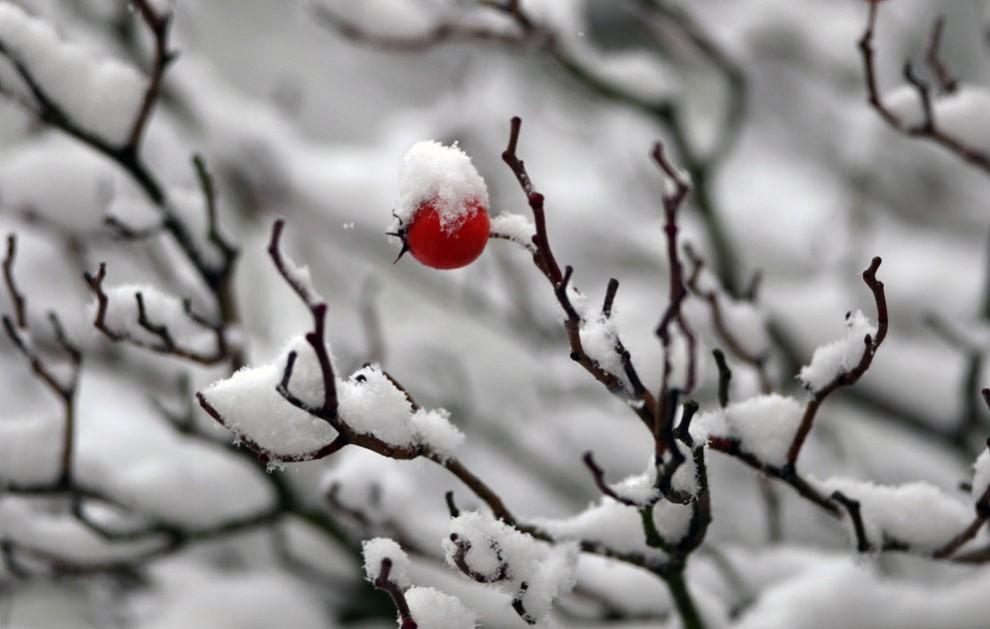 196 990x629 Настоящая зима, наконец, пришла