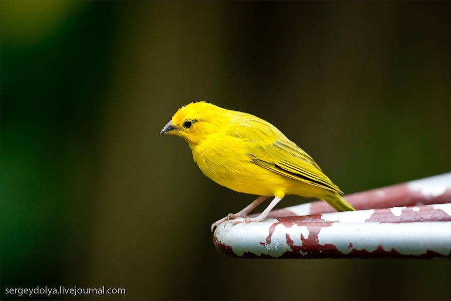 2025 Сингапурский парк птиц