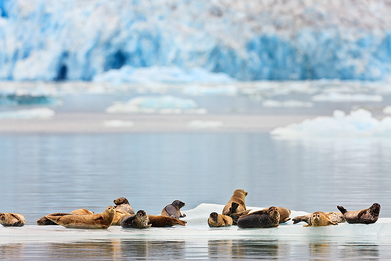 2053 Холодная красота Аляски от фотографа Рея Балсона