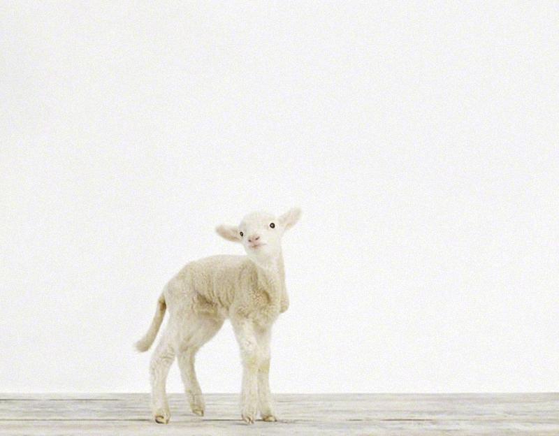 2158 Малыши животных в фотографиях Шерон Монтроуз