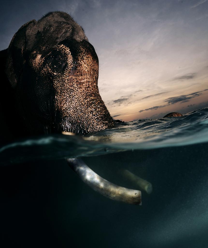 2268 Последний плавающий слон