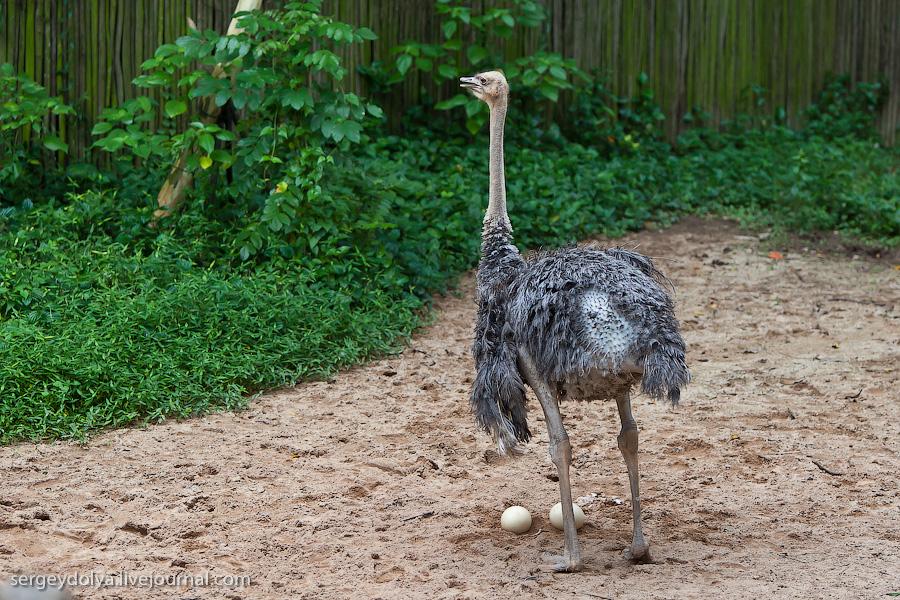 2325 Сингапурский парк птиц