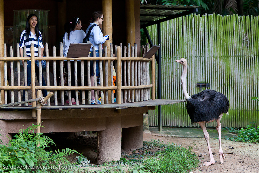 2422 Сингапурский парк птиц