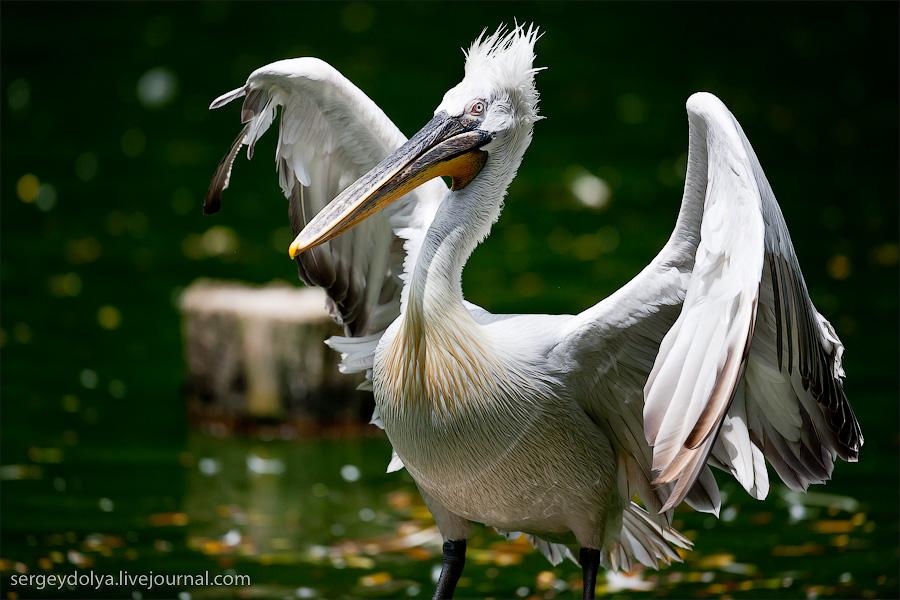 2817 Сингапурский парк птиц