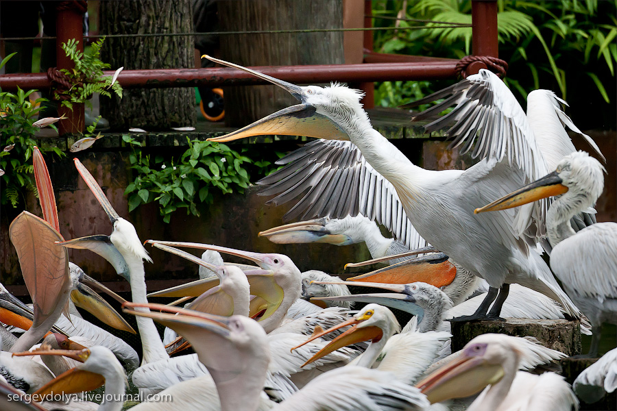 2916 Сингапурский парк птиц