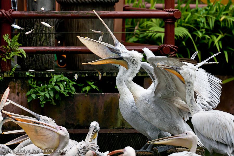 3014 Сингапурский парк птиц