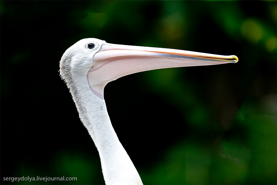 3121 Сингапурский парк птиц