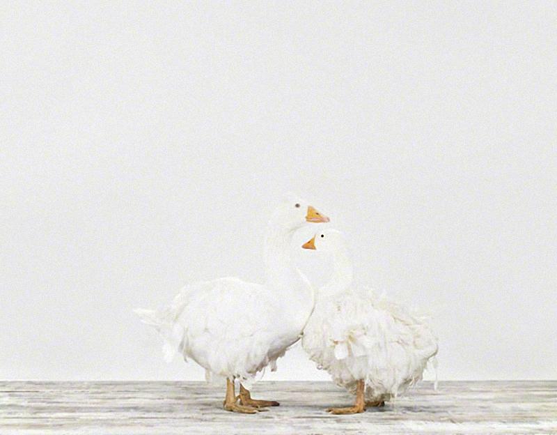 3134 Малыши животных в фотографиях Шерон Монтроуз