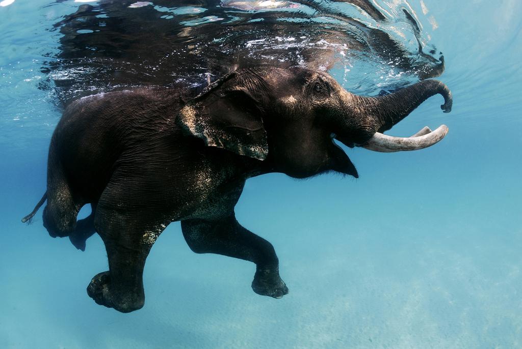 денег картинка плывущий слон него скользящая, выпадает