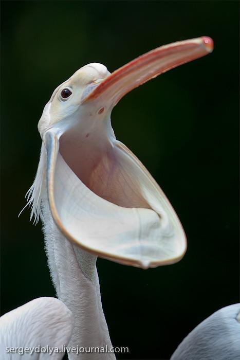 3218 Сингапурский парк птиц