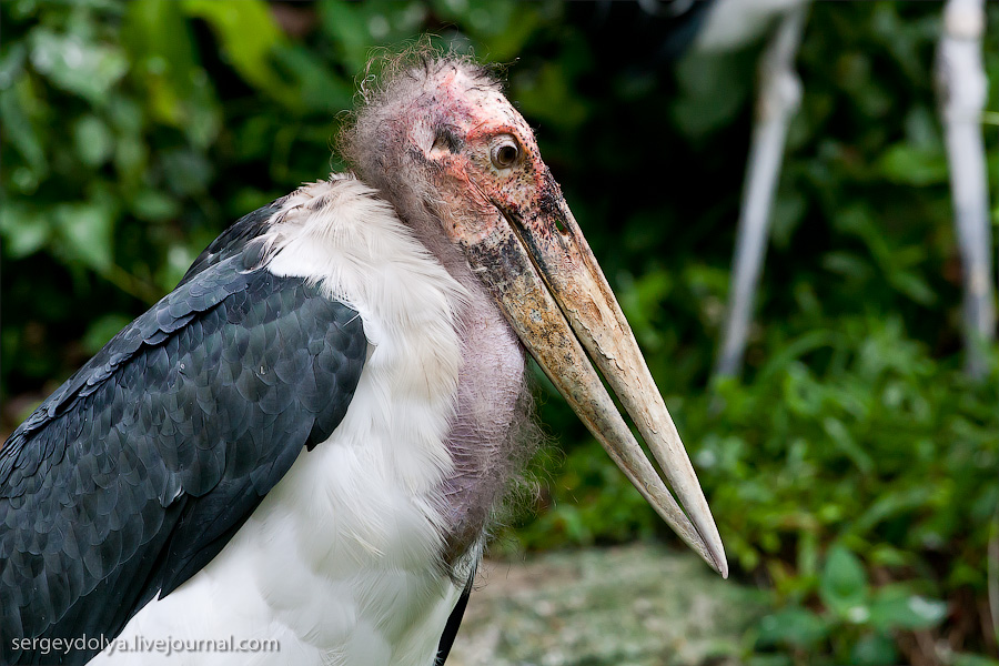 3416 Сингапурский парк птиц