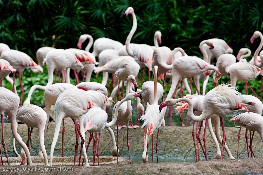 3515 Сингапурский парк птиц