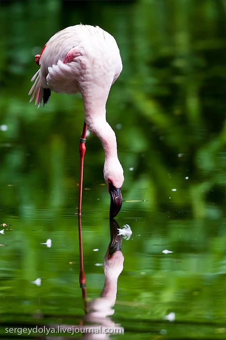 3613 Сингапурский парк птиц