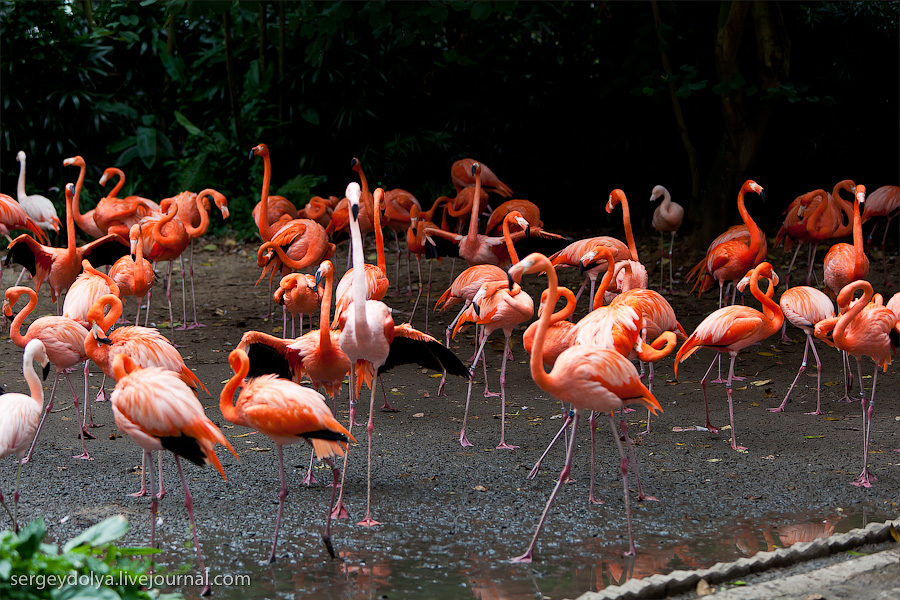3712 Сингапурский парк птиц