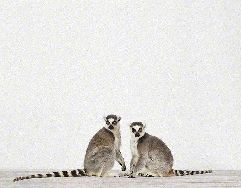 4104 Малыши животных в фотографиях Шерон Монтроуз