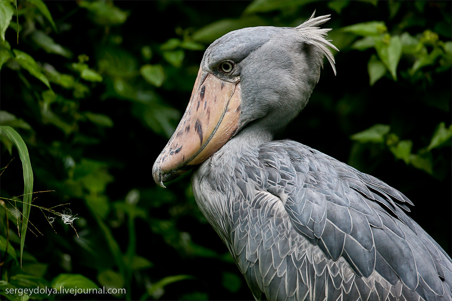 4215 Сингапурский парк птиц