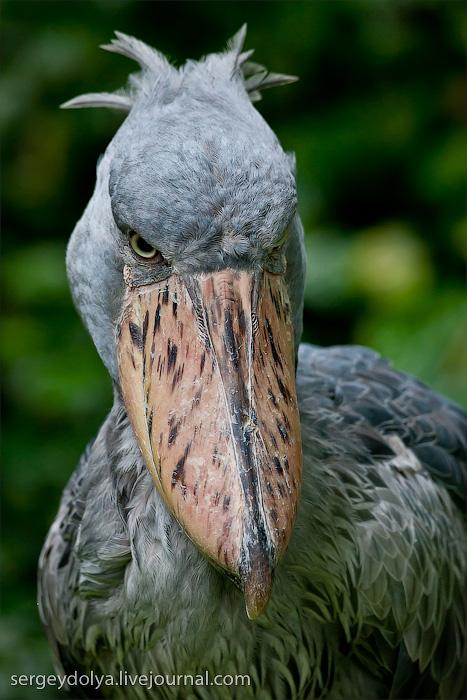 4314 Сингапурский парк птиц